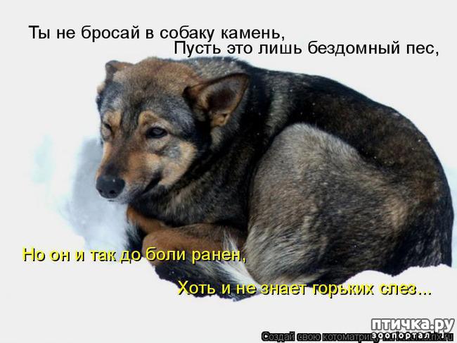фото 8: Смешные собаки: номер неизвестен