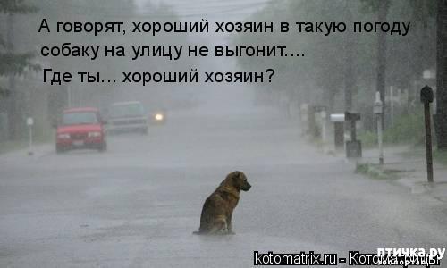фото 9: Смешные собаки: номер неизвестен