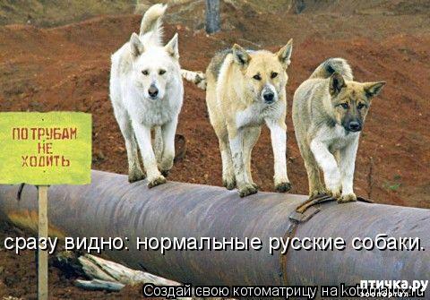 фото 10: Смешные собаки: номер неизвестен