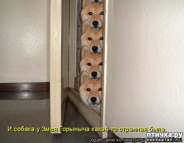 фото 12: Смешные собаки: номер неизвестен