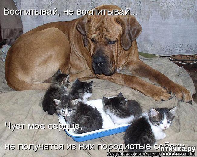 фото 14: Смешные собаки: номер неизвестен