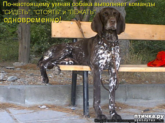 фото 18: Смешные собаки: номер неизвестен