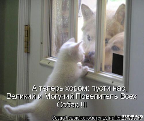 фото 17: Смешные собаки: номер неизвестен