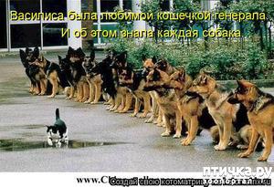 фото: Смешные собаки: номер неизвестен