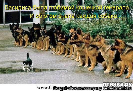 фото 1: Смешные собаки: номер неизвестен