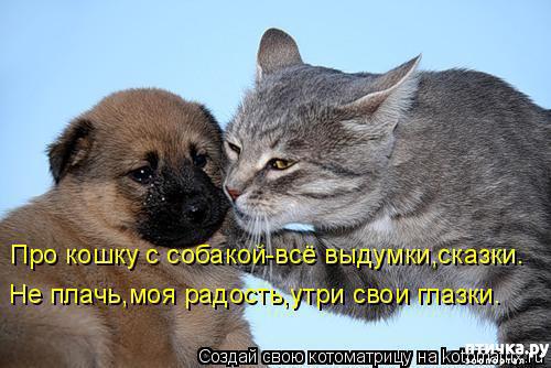 фото 2: Смешные собаки: номер неизвестен