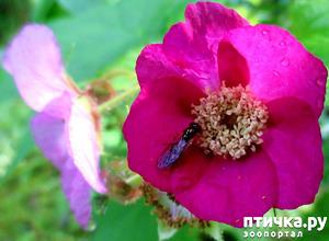 фото: Из жизни насекомых
