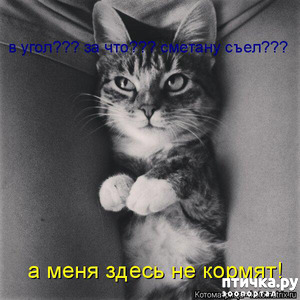 фото: Мои котоматрицы.
