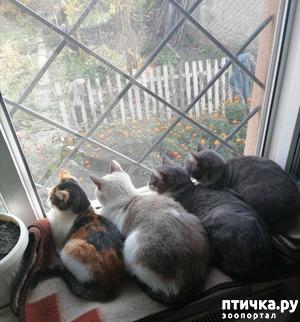фото: Мои младшие пушистики на окне