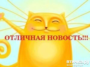 фото: Новость вторая - ПРЕКРАСНАЯ!