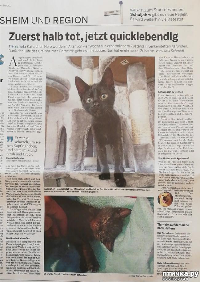 фото 1: О нашем котейке написали в газете)))