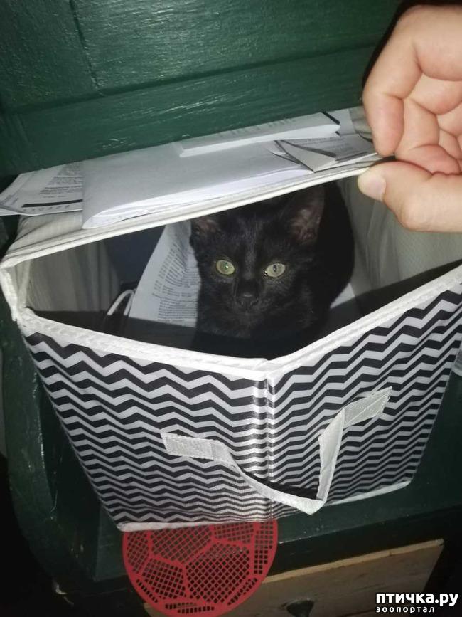 фото 4: О нашем котейке написали в газете)))