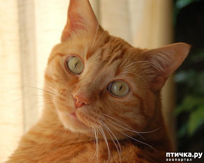 фото 1: Опасно быть домовитой кошкой! Или: соблюдайте правила безопасности при уходе за домом!