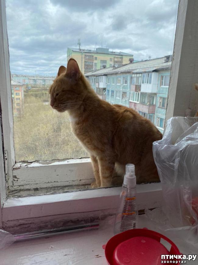 фото 3: Опасно быть домовитой кошкой! Или: соблюдайте правила безопасности при уходе за домом!