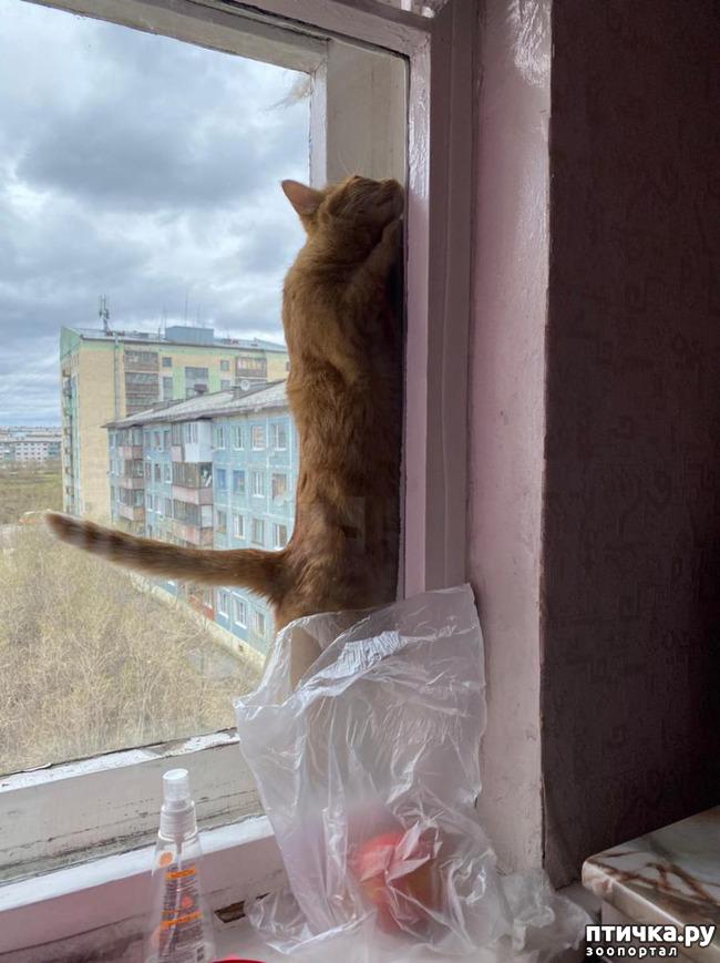 фото 4: Опасно быть домовитой кошкой! Или: соблюдайте правила безопасности при уходе за домом!