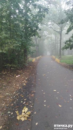 фото: Ежик в тумане