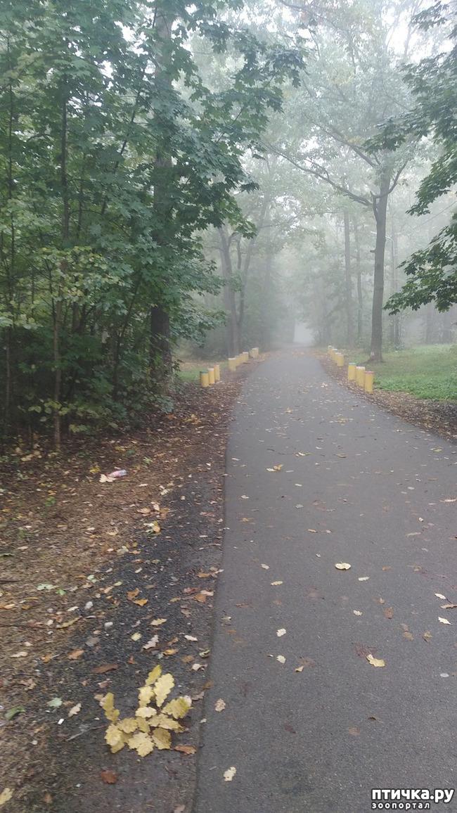 фото 1: Ежик в тумане