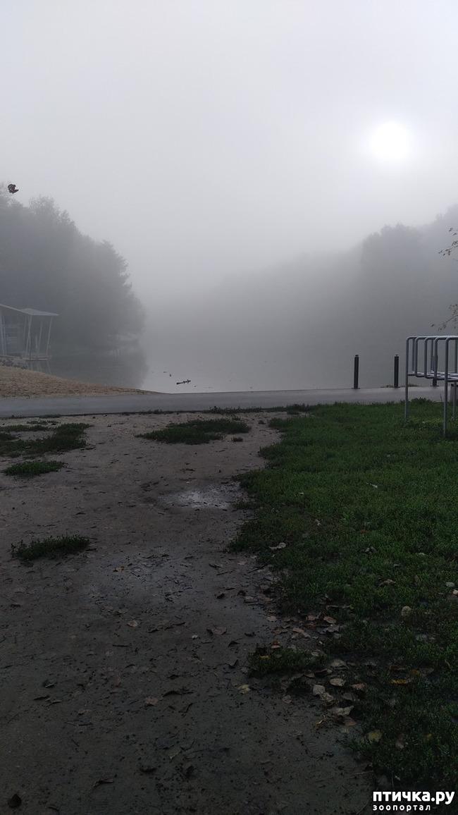 фото 2: Ежик в тумане