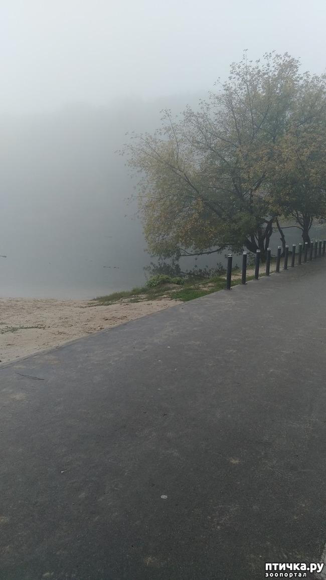 фото 3: Ежик в тумане