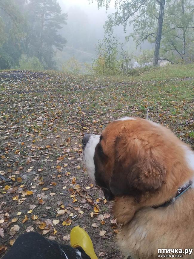 фото 5: Ежик в тумане