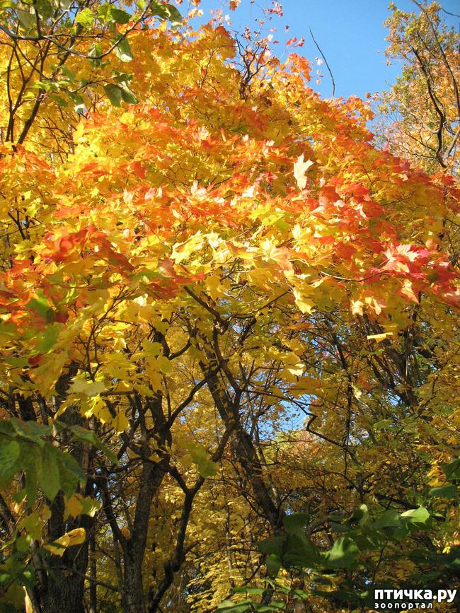 фото 1: Не знаю, как у кого, а у нас уже осень!
