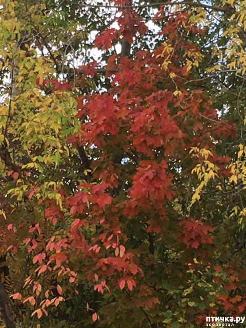 фото 3: Не знаю, как у кого, а у нас уже осень!