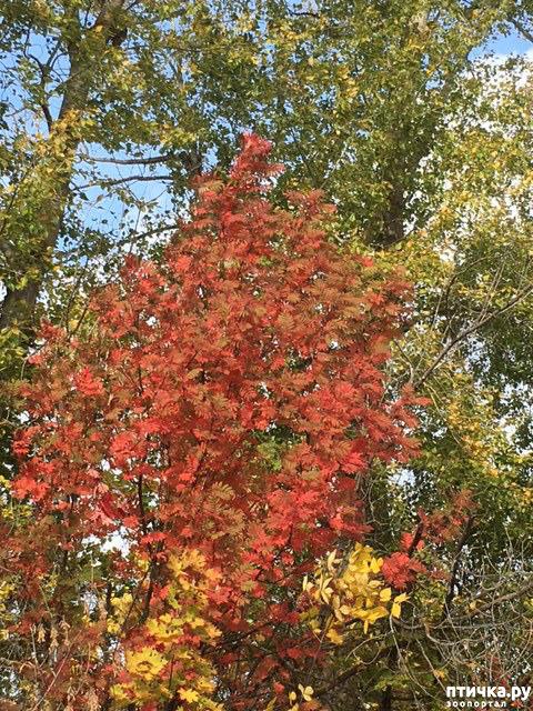 фото 5: Не знаю, как у кого, а у нас уже осень!