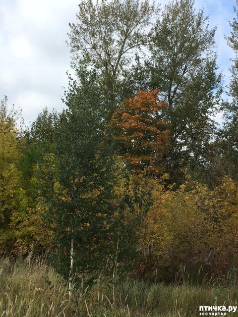 фото 6: Не знаю, как у кого, а у нас уже осень!
