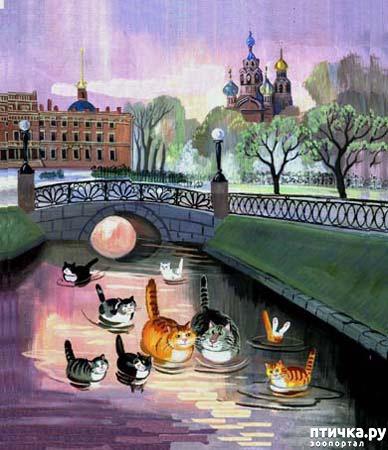 фото 7: Котики Татьяны Родионовой