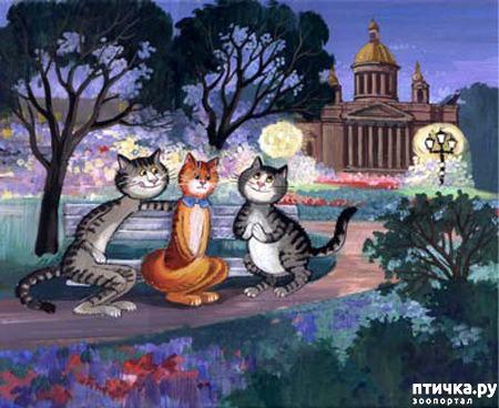 фото 18: Котики Татьяны Родионовой