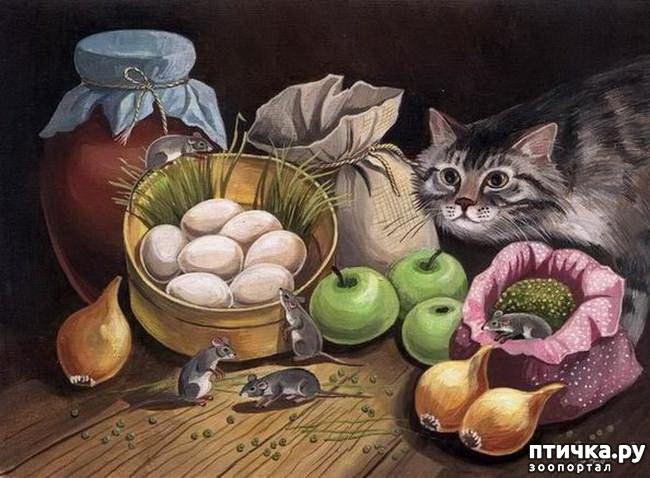 фото 22: Котики Татьяны Родионовой