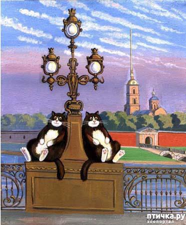 фото 27: Котики Татьяны Родионовой