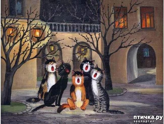 фото 31: Котики Татьяны Родионовой