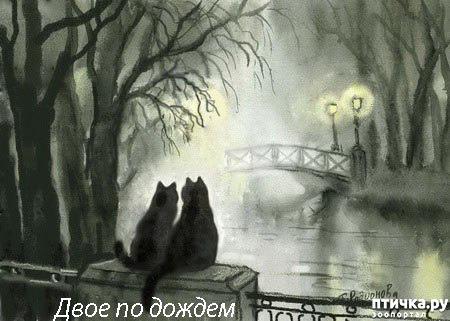 фото 39: Котики Татьяны Родионовой