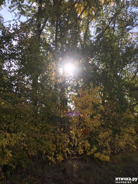 фото 8: Не знаю, как у кого, а у нас уже осень!
