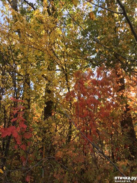 фото 9: Не знаю, как у кого, а у нас уже осень!