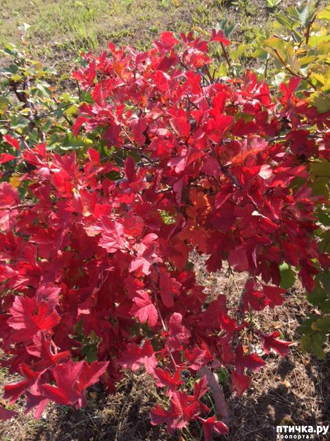 фото 10: Не знаю, как у кого, а у нас уже осень!