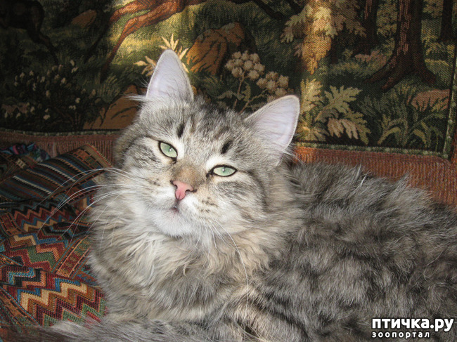 фото 2: Котики Татьяны Родионовой