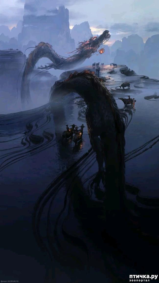 фото 6: Китайские Драконы