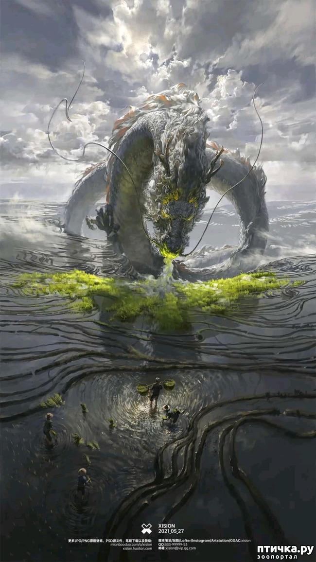 фото 3: Китайские Драконы