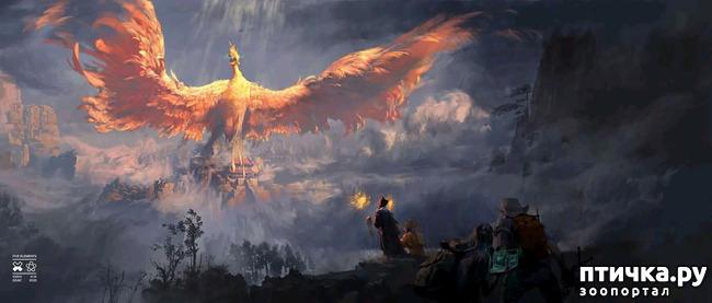 фото 11: Китайские Драконы