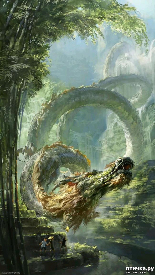 фото 4: Китайские Драконы