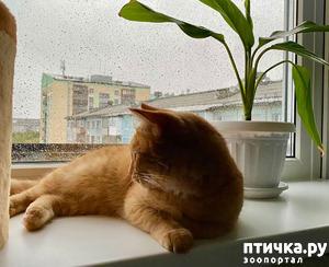 фото: Меморандум Кисы.