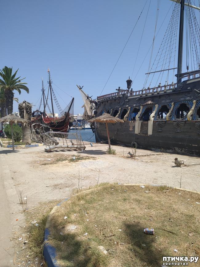 фото 2: Тунис. Итоги.