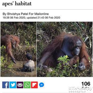 фото: Индонезийский орангутан и змеи