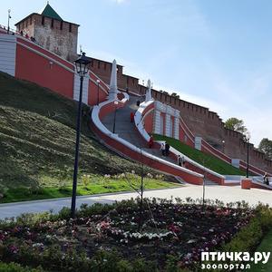 фото: За кремлевскими стенами
