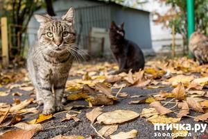 фото: День кошек 4, часть 1