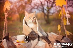 фото: Осенняя лирика.