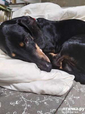 фото: Почему собаки глотают несъедобные предметы?