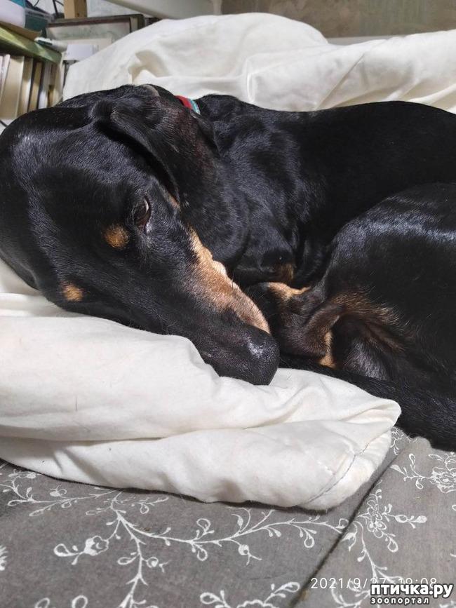 фото 1: Почему собаки глотают несъедобные предметы?